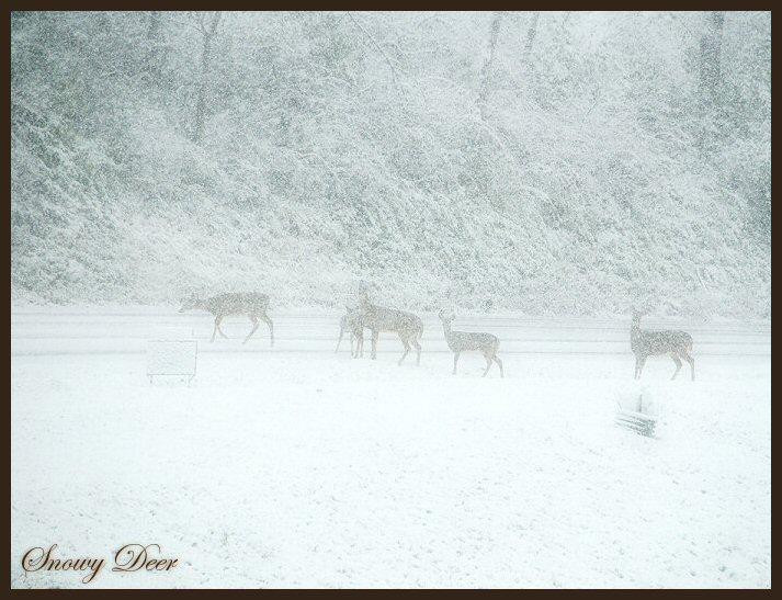 Snowy Deer 1