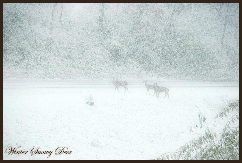 Snowy Deer 2